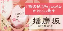 「桜の花びら」のようなかわいい 播磨坂